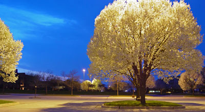 Spring at Night